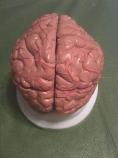 Brain Model & Base-12